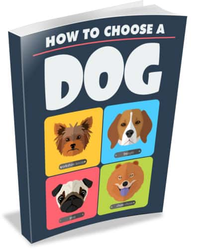 how to choose the right dog