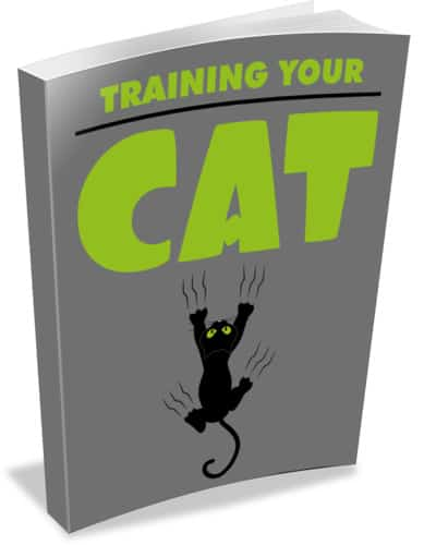 Training Your Cat
