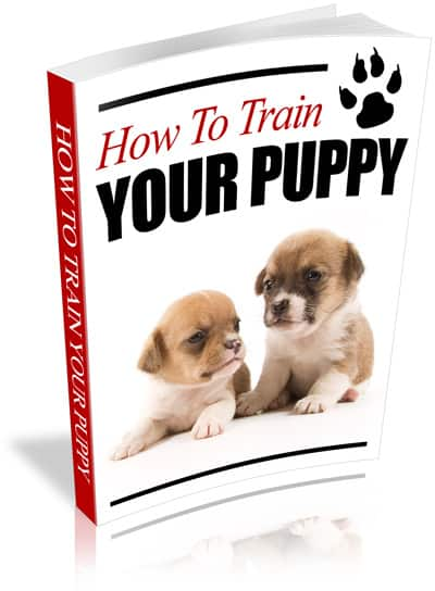 How to Train Your Puppy PLR Ebook