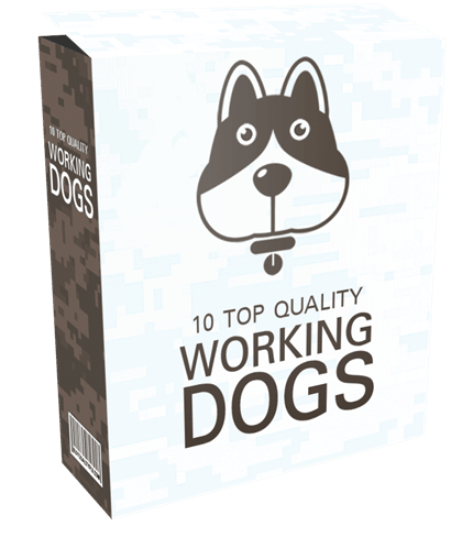 10-top-quality-working-dogs-plr-articles